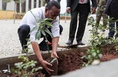 Ethiopia khởi động phong trào trồng 6 tỷ cây xanh trong năm 2021