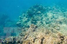 Nhà khoa học cảnh báo về triển vọng phục hồi rạn san hô Barrier Reef