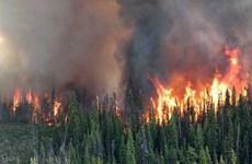 Canada: Tỉnh British Columbia ban bố tình trạng khẩn cấp vì cháy rừng