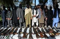 Afghanistan: 50 tay súng Taliban đầu hàng các lực lượng an ninh