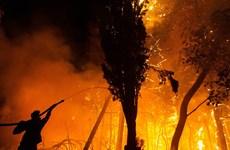 Tây Ban Nha, Bồ Đào Nha cảnh giác với cháy rừng do nắng nóng