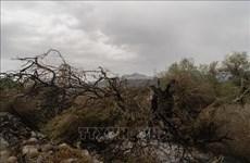 Cháy rừng lan rộng tại miền Nam Italy sau khi nhiệt độ tăng kỷ lục