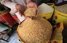 Giá gạo Ấn Độ giảm xuống mức thấp trong bốn năm rưỡi