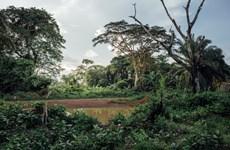 Khởi động các nỗ lực mới để bảo tồn đa dạng sinh học