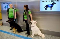 Sân bay UAE triển khai chó nghiệp vụ phát hiện người mắc COVID-19