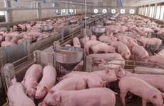 Nga là nhà cung cấp thịt lợn lớn nhất cho Việt Nam
