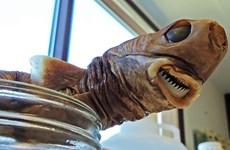 Kinh ngạc loài cá mập tí hon tấn công được cả tàu ngầm hạt nhân