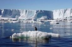 Bán đảo Nam Cực ghi nhận mức nhiệt cao kỷ lục - 18,3 độ C