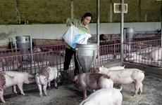 Giá lợn hơi vẫn giảm bất chấp việc ngừng nhập lợn sống từ Thái Lan