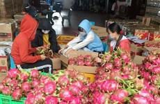 Xuất khẩu thanh long vẫn qua cửa khẩu Hữu Nghị, Tân Thanh