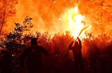 Cháy rừng gây nhiều thiệt hại ở Hy Lạp, Thổ Nhĩ Kỳ và Mỹ
