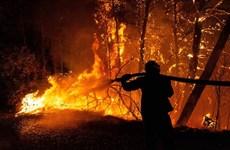 Thủ đô của Hy Lạp chìm trong khói bụi dày đặc do cháy rừng