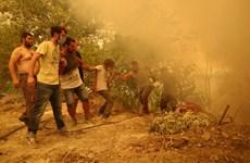 Hy Lạp: Hàng nghìn người sơ tán khi cháy rừng tàn phá đảo Evia