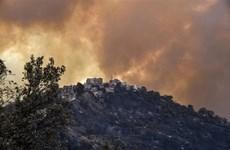 Ít nhất 65 người thiệt mạng do cháy rừng tại Algeria