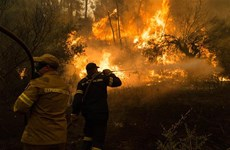 Hy Lạp: Cháy rừng tiếp tục hoành hành trên bán đảo Peloponnese