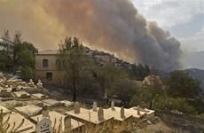 Algeria bắt giữ 22 nghi phạm gây ra thảm họa cháy rừng