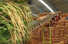 Giá gạo Thái Lan thấp nhất trong 2 năm do đồng baht suy yếu