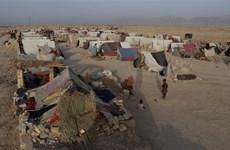Áo, Séc trục xuất người tị nạn Afghanistan không đủ điều kiện