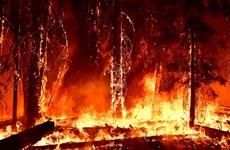"""Cháy thiêu rụi hơn 1.000 ha rừng ở Tây Ban Nha là """"do phá hoại"""""""