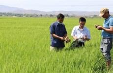 Tránh nguy cơ thiếu giống lúa cho sản xuất vụ Đông Xuân