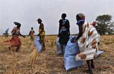 WFP cắt giảm viện trợ lương thực cho người dân Nam Sudan