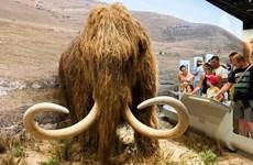 Tham vọng hồi sinh voi ma mút lông xoăn đã tuyệt chủng
