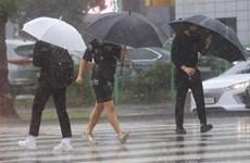 Hàn Quốc: Đảo Jeju ngập nặng, nhiều chuyến bay bị hủy vì bão Chanthu