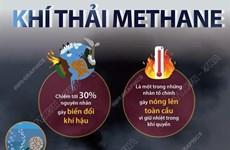 Ứng phó với biến đổi khí hậu: Những điều cần biết về khí thải methane