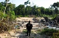 Nạn phá rừng tại Amazon tác động tới sức khỏe của hơn 12 triệu người