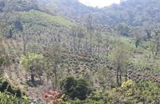 Để mất hơn 300ha rừng, một doanh nghiệp bị thu hồi dự án lâm nghiệp