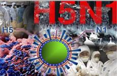 Thêm hai trường hợp nhiễm virus H5N1 tại Campuchia
