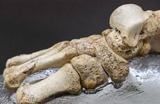 Giải mã ADN cổ xưa nhất của người 400.000 năm trước