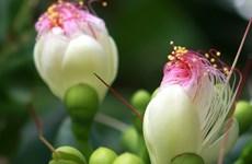 Sắc hoa Xuân ở nơi biển đảo biên cương của Tổ quốc