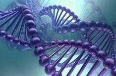 Bổ sung hai chữ cái vào mã di truyền của con người