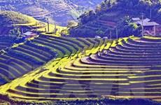 Ruộng bậc thang mùa nước đổ ở Lào Cai thu hút du khách