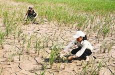 """Bình Định khẩn cấp giải quyết nước sinh hoạt cho """"vùng khát"""""""