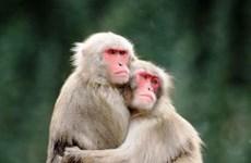 VQG Phong Nha-Kẻ Bàng tiếp nhận nhiều cá thể động vật quý hiếm