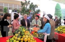 Cam Cao Phong của tỉnh Hòa Bình được đăng ký chỉ dẫn địa lý