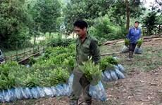 Chính phủ khuyến khích trồng rừng gỗ lớn để nâng cao hiệu quả