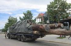 Lâm Đồng: Xe chở gỗ lậu tông chết một cán bộ kiểm lâm