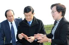 Chủ tịch nước thăm các mô hình nông nghiệp hiện đại ở Hà Nam