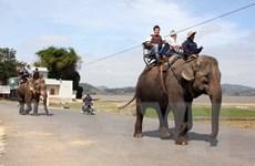 """Đầu năm lên Đắk Lắk trải nghiệm du lịch """"trên lưng voi"""""""