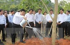 Chủ tịch nước phát động Tết trồng cây Xuân Ất Mùi năm 2015