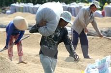 Thu mua tạm trữ lúa gạo ở ĐBSCL: Được-Mất từ một chính sách