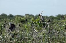 Vườn chim Prek Toal của Campuchia được công nhận là khu Ramsar
