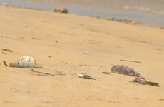 Lấy mẫu tìm nguyên nhân cá chết bất thường ở biển Quảng Bình
