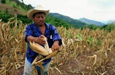 Các nước vùng Caribe sắp sửa thoát khỏi hiện tượng El Nino