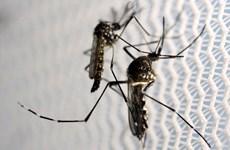 Cảnh báo nguy cơ Zika lan rộng tại bờ biển vùng Vịnh nước Mỹ