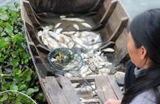 Đồng Tháp công bố nguyên nhân cá chết hàng loạt trên sông Cái Vừng
