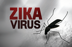 Virus Zika hoành hành ở Singapore, Bộ Y tế họp bàn ứng phó